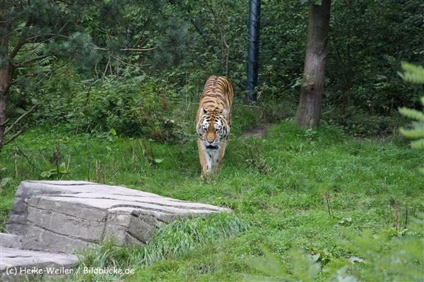 Zoo Wuppertal 040910 - IMG_1743