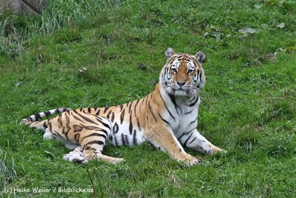 Zoo Wuppertal 040910 - IMG_1759-2