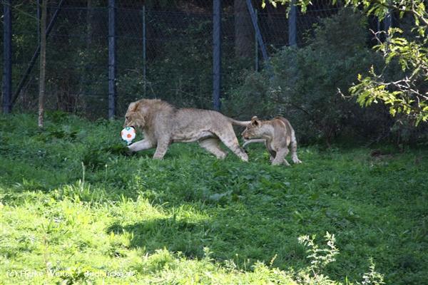 Zoo Wuppertal 040910 - IMG_1855