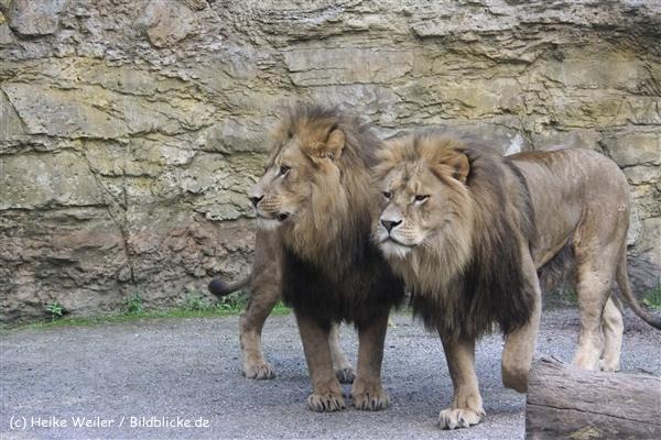 Zoo Wuppertal 040910 - IMG_1902