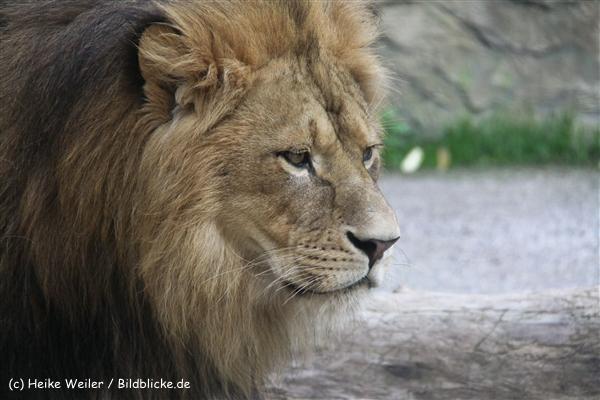 Zoo Wuppertal 040910 - IMG_1908