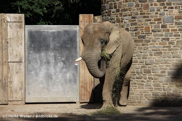Zoo Wuppertal 040910 - IMG_1950-2