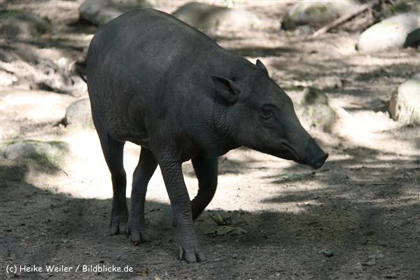 Zoo Wuppertal 040910 - IMG_1956