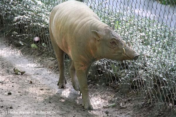 Zoo Wuppertal 040910 - IMG_1963