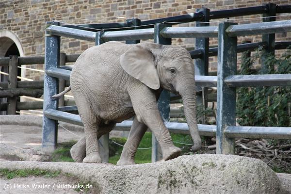 Zoo Wuppertal 040910 - IMG_1982