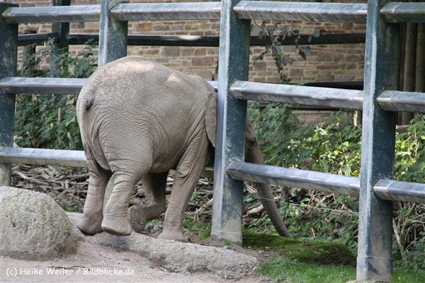 Zoo Wuppertal 040910 - IMG_1984