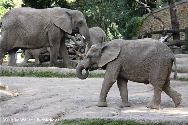 Zoo Wuppertal 040910 - IMG_1998