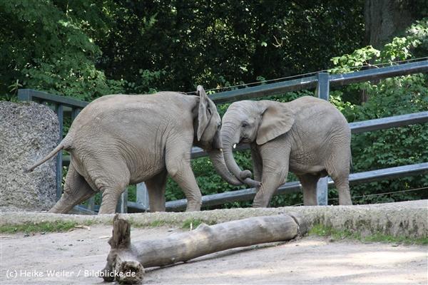 Zoo Wuppertal 040910 - IMG_2020-2