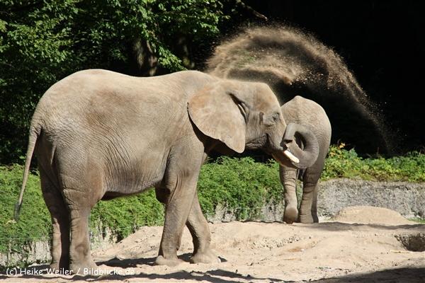 Zoo Wuppertal 040910 - IMG_2023