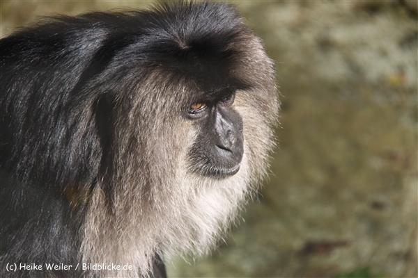Zoo Wuppertal 040910 - IMG_2029-2