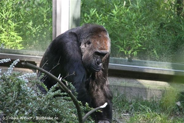 Zoo Wuppertal 040910 - IMG_2036-2