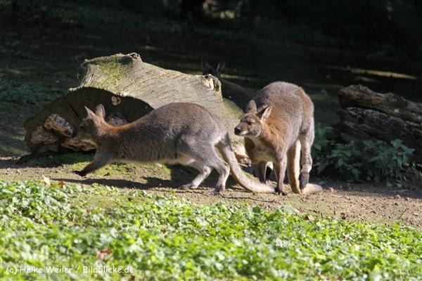 Zoo Wuppertal 040910 - IMG_2057