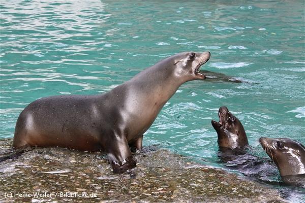 Zoo Wuppertal 040910 - IMG_2123