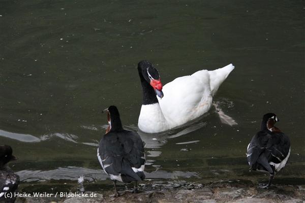 Zoo Wuppertal 040910 - IMG_2144