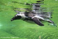 Zoo Wuppertal 040910 - IMG_1372