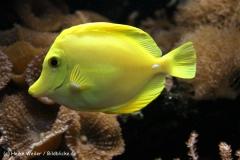 Zoo Wuppertal 040910 - IMG_1386