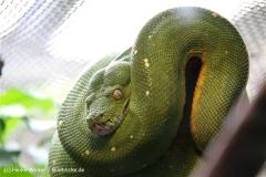 Zoo Wuppertal 040910 - IMG_1440