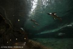 Zoo Wuppertal 040910 - IMG_1587-2
