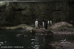 Zoo Wuppertal 040910 - IMG_1592