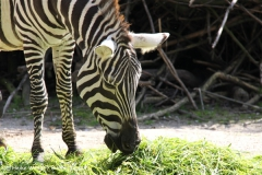 Zoo Wuppertal 040910 - IMG_1650