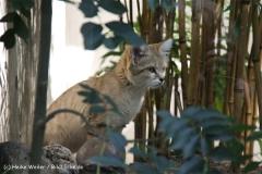 Zoo Wuppertal 040910 - IMG_1653