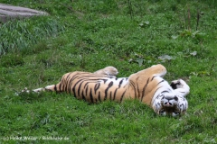 Zoo Wuppertal 040910 - IMG_1750