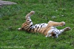 Zoo Wuppertal 040910 - IMG_1754