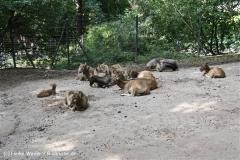 Zoo Wuppertal 040910 - IMG_1915