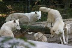 Zoo Wuppertal 040910 - IMG_1939