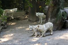 Zoo Wuppertal 040910 - IMG_1941-2