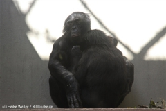 Zoo Wuppertal 040910 - IMG_2042