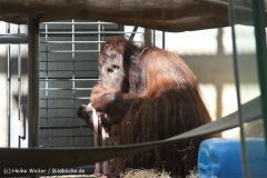 Zoo Wuppertal 040910 - IMG_2051