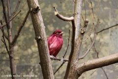 Zoo Wuppertal 040910 - IMG_2079