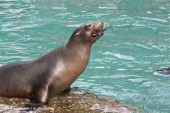 Zoo Wuppertal 040910 - IMG_2118