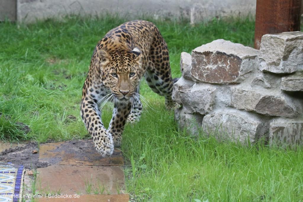 Zoo_Hannover_290716_IMG_6747-1024x682.jpg