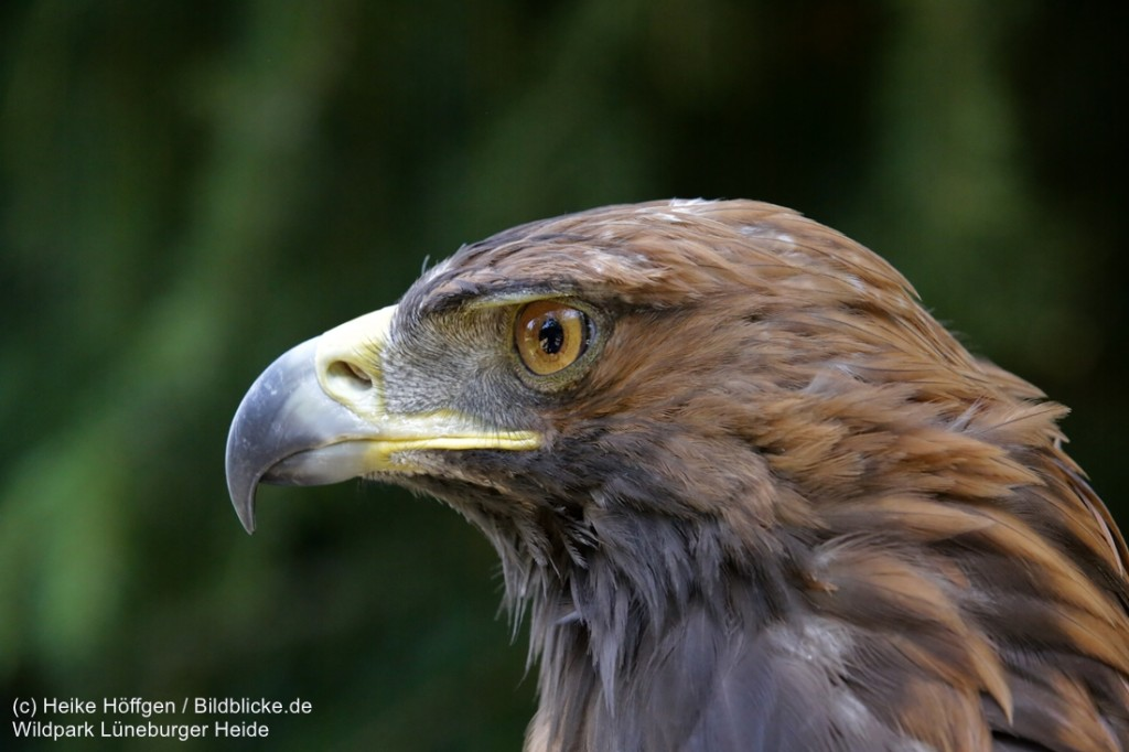 Wildpark_Lueneburger_Heide_050917_IMG_09513-1024x682.jpg