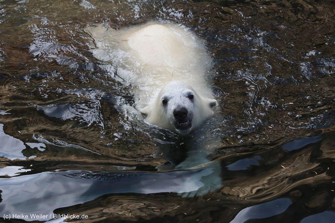 Zoo_Bremerhaven_100516_IMG_3372