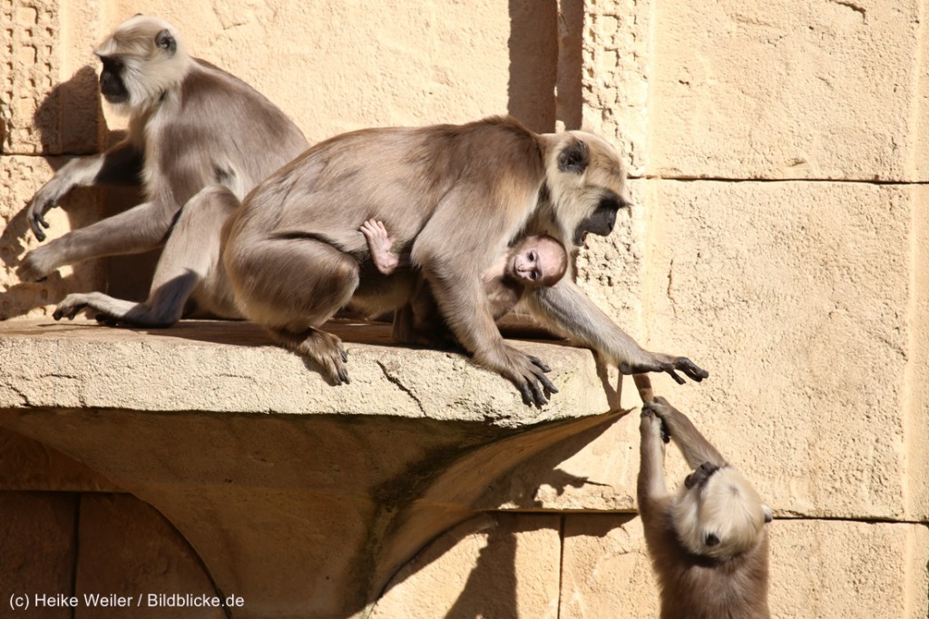 Zoo_Hannover_010416_IMG_0441-1024x682.jpg