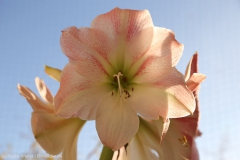 Blumen_IMG_2423