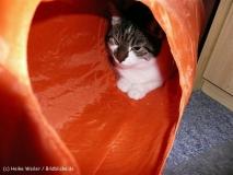 Katzen 2008 - 080213 P1060711
