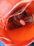 Katzen 2008 - 080507 068