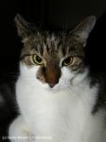 Katzen 2008 - 080810 082