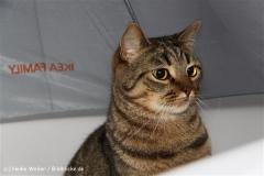 Katzen 2009 - 090901 IMG_8293