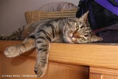 Katzen 2010 - 100711 IMG_6055