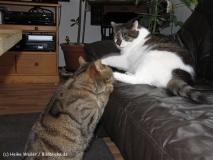 Katzen 2010 - 100804 IMG_1741