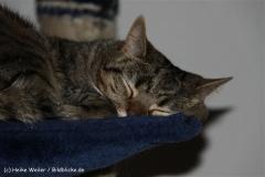 Katzen2011_IMG_1612