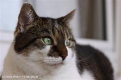 Katzen2011_IMG_2631
