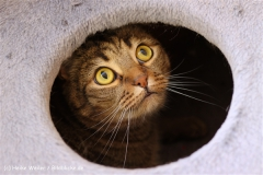 Katzen2011_IMG_2648