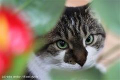 Katzen2011_IMG_2752