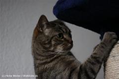 Katzen2011_IMG_2808